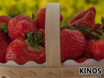 Thumb strawberries 2234776 960 720.jpg